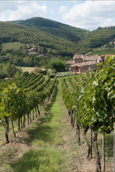Private wine tour from Florence